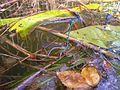 Libelle-im-Wasser.jpg
