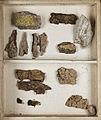 Lichenes Helvetici I II 1842 029.jpg