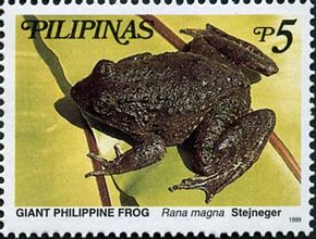 Description de l'image Limnonectes magnus 1999 stamp of the Philippines.jpg.