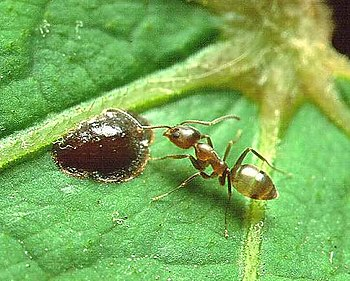 An Ant Virus May Be A New Form of Pest Control