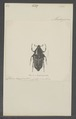 Liostraca - Print - Iconographia Zoologica - Special Collections University of Amsterdam - UBAINV0274 022 05 0003.tif