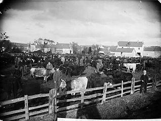 Llanbydder fair (November 1891)