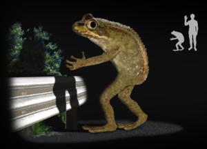 Loveland frog - Artist's impression of Loveland frog legend