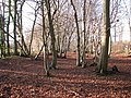 Lower Wood Nature Reserve - geograph.org.uk - 1614921.jpg
