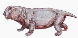 Lystrosaurus - Lystrosaurus murrayi