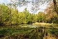 Münster, Wolbeck, Wolbecker Tiergarten, Naturwaldzelle -Teppes Viertel- -- 2014 -- 7084.jpg