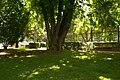 MADRID A.V.U. PASEO DEL PRADO-JARDINES - panoramio (12).jpg