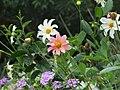 Madeira - Funchal - Jardim Botanico (2093603690).jpg