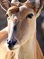 Mammal (15254561009).jpg