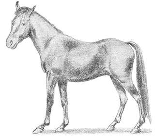 Manipuri Pony