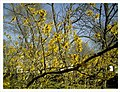 March Spring Botanischer Garten Freiburg - Master Seasons Rhine Valley Photography - panoramio.jpg