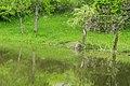 Mare de Mezeilles 07.jpg