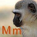Maymun için M.JPG