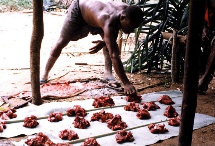 Mbendjele meat sharing