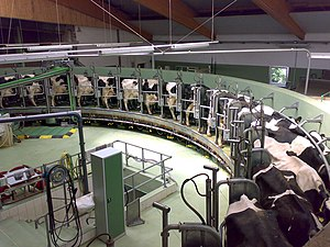 Dairy farming - A rotary milking parlor at a modern dairy facility, located in Germany