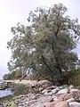 Merivälja - panoramio - Aulo Aasmaa (22).jpg