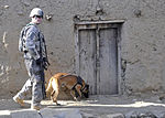 Military Working Dogs Take a Bite Out of IEDS in Afghanistan DVIDS214372.jpg