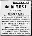 Mimosa Théoule.jpg