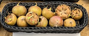 Mespilus germanica - A basket of medlars