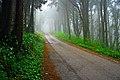 Misty road (4489413812).jpg