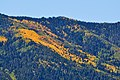 Mixture of fall colors seen from Hwy 89 (3971420537).jpg