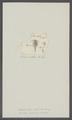 Monoculus captivus - - Print - Iconographia Zoologica - Special Collections University of Amsterdam - UBAINV0274 100 01 0035.tif