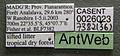 Monomorium versicolor casent0026023 label 1.jpg