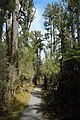 Monro Beach walkway through native West Coast forest.jpg