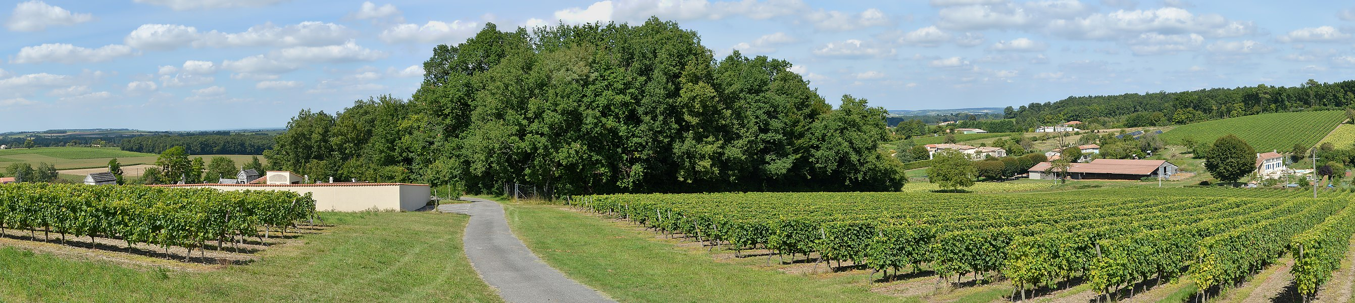 Landscape with vineyards in the cognac area (Petite Champagne), N-NE of Montchaude, Charente, France.