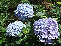 Monte Palace Tropical Garden DSCF0168 (4642532137).jpg