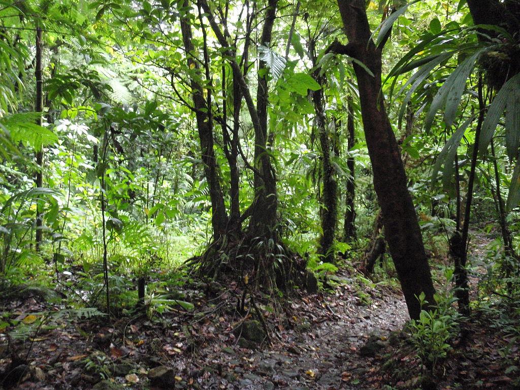filemorne trois pitons national park dominica jungle