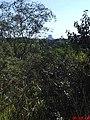 Morro do Cuscuzeiro visto da Entrada de Analândia - panoramio.jpg