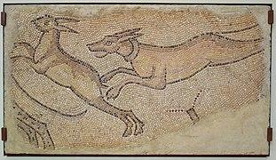 File:Mosaic of Dog Chasing a Rabbit, Roman, Homs, Syria, 450-462 AD, polychrome marble tesserae - Chazen Museum of Art - DSC01916.JPG