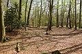 Mottenhügel der Ferdinandsburg mit umgebendem Graben (Foto Eismann).jpg