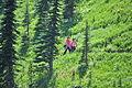 Mount Rainier - Paradise meadow, August 2014 - 08.jpg