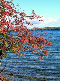 Mountain ash autumn lake.jpg