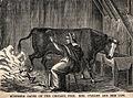 Mrs OLeary's cow.jpg