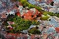 Mt Cook Lichens - panoramio.jpg