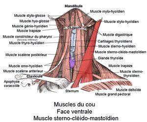 Les exercices pour le service de poitrine et le cou dikoul vidéo