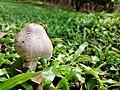 Mushroom on the green.jpg