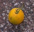 Naranja-Tandil-jun2019.jpg