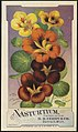 Nasturtium, from seeds put up by D. M. Ferry & Co., Detroit, Mich. (front) - 8960909231.jpg