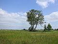 Nationaal Park Weerribben-Wieden. Bomengroep 01.JPG