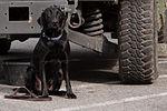 National Guardsmen support 57th Presidential Inauguration 130121-Z-QU230-121.jpg