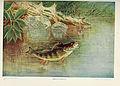 Nature neighbors (Plate 271) (6276934870).jpg