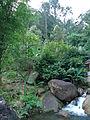 Nature of Langkawi (14).JPG