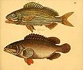 Naturgeschichte in Bildern mit erläuterndem Text (Taf. CV) (6058676453).jpg