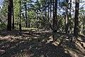 Near Deep Creek Divide - Flickr - aspidoscelis.jpg
