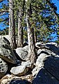 Near San Jacinto Peak, CA 2-7-14r (15918843354).jpg
