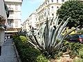Nice - panoramio - M.Strīķis (13).jpg